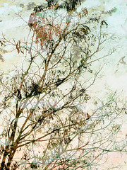 Dreaming Tree photo by Alkimisti