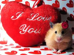 ♡ Happy Valentine's Day! ♡ photo by pyza*