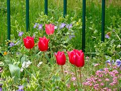 Fleurs municipaux (1) detail