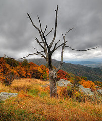 Dead but Alive - Shenandoah National Park photo by Dwood Photography