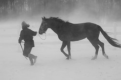 Walking the Horse photo by Soller Photo