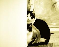 Wall & Spy Cats. photo by David Prando Photoimmaginista