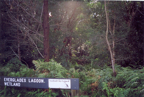 Paperbark Forest #5