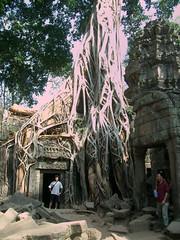 Templo comido por la jungla