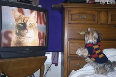 A dog watching a cat on TV