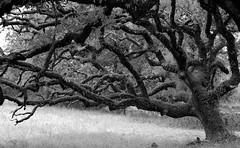 07.23.05.00. Family tree