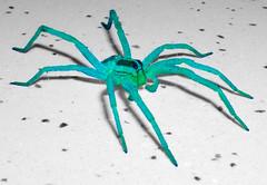spider-martian