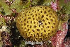 Coral vivo