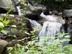 Yourou waterfall  #2