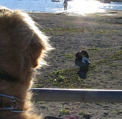 Dog Watching
