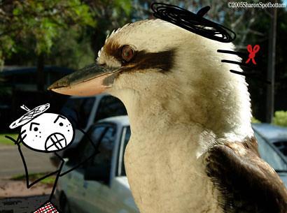 sharons-kookaburra