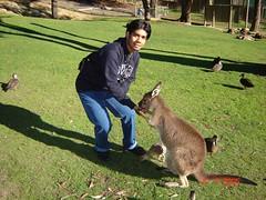 Kasi kangaroo makan di Ballarat Wildlife Park, Australia