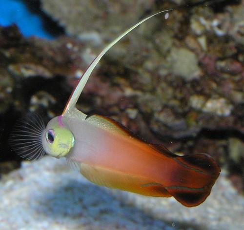 New Fish Saltwater Aquarium
