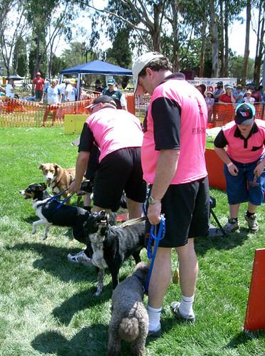 buff dogs