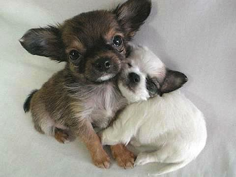 Puppies Cuddling 2 cute puppies cuddling photo
