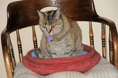 20080219 Cat Bed with Persy