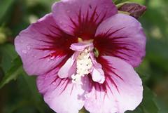 Blüte01