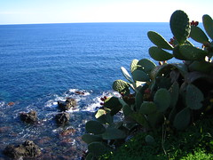 cacti, sea and rocks by daynoir