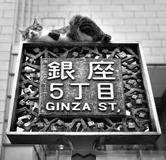 銀座5丁目の猫 photo by ajpscs