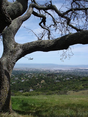 View of the Peninsula from the top of Edgewood Park (by ~summer~)