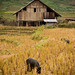 Vietnam-0286 © Bart Plessers