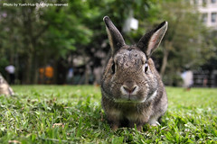 Schoolmate's Rabbit in NTUST photo by *Yueh-Hua 2014