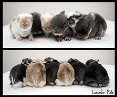 Shuffling Bunnies photo by Canonshot Mole