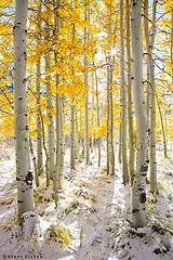 Eastern Sierra Nevada - Pure photo by Steve Sieren Photography