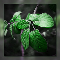 Green photo by Alkimisti