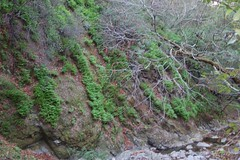 8a. Differing habitats of Alum Rock Photo