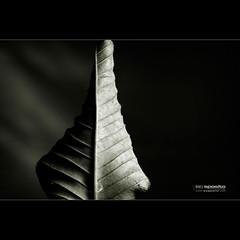 Yin Yang. photo by El Onofre