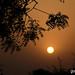 India_nature (13)