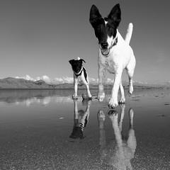 Flash & Nipper photo by K_iwi