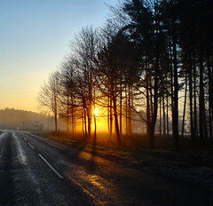 Sunrise On Cannock Chase photo by Jennie Anderson