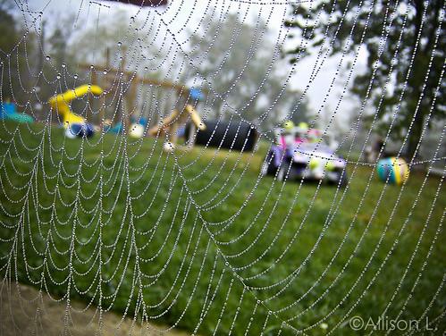 Spider Spa