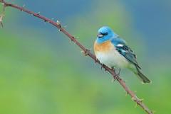blue photo by brodmann's 17