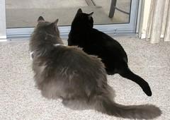 Heisenberg and Schrödinger at the patio door