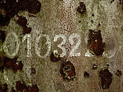 serial number photo by sy parrish