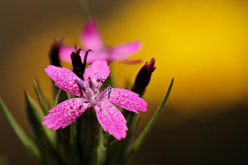 Fleur / Flower