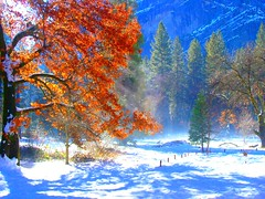 Yosemite Fall Colors in Winter photo by wbirt1
