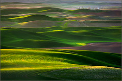 Palouse Green#2 photo by Chip Phillips