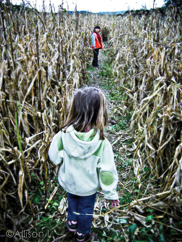 The Girls in the Corn Maze