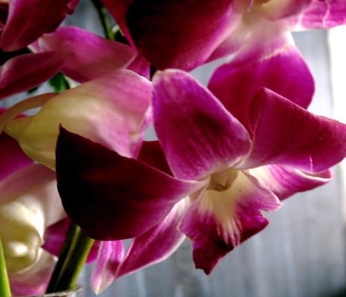 orchids (4)