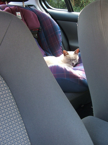 CatCarSeat