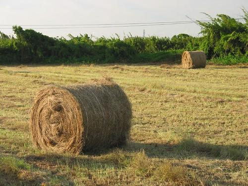 成捆的稻草