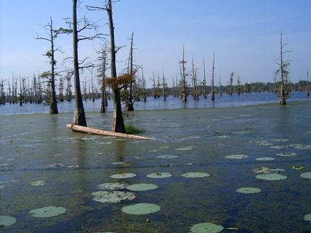 More bayou