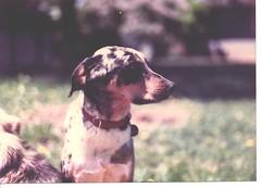 Arlo, 1987