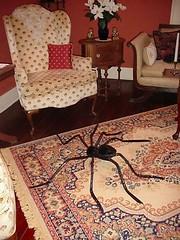 spider 666