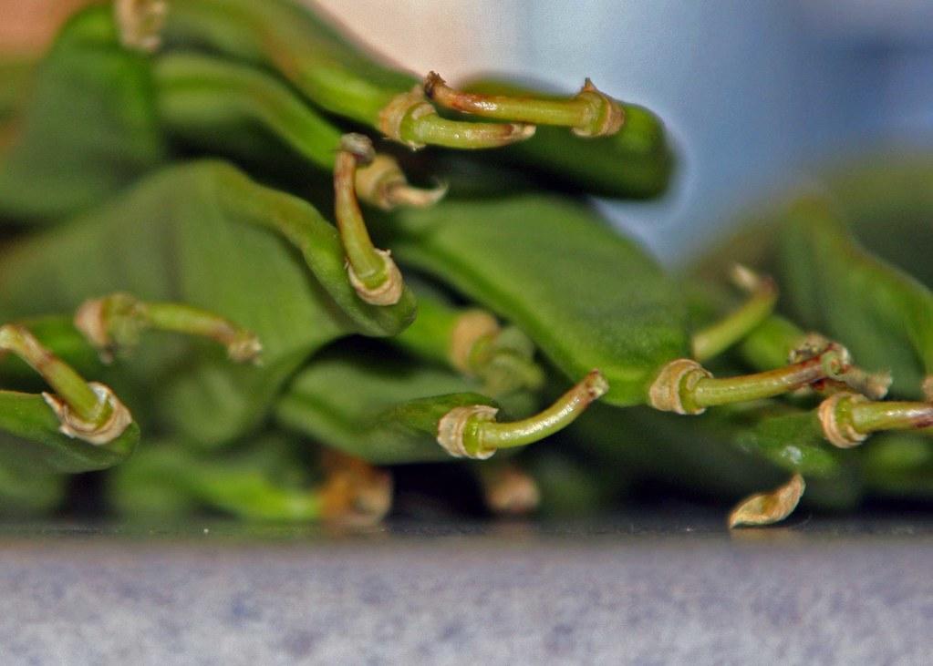 bean-ends