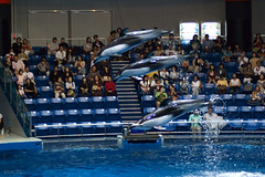 Jump of trio dolphins